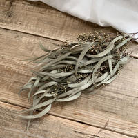 dry flower [Eucalyptus exotica]