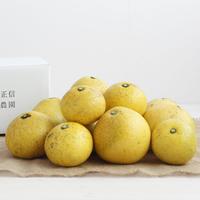 【450-110】文旦(5kg)