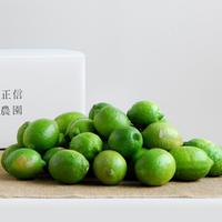 【450-102】レモン(10kg)