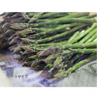 【B品】春風のアスパラ S~2Lサイズ混合 1kg