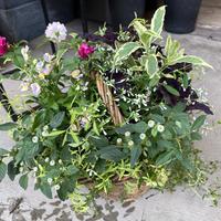 Bouquet de Pot (M)