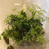 観葉植物のBouquet de Pot