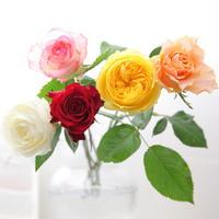 バラの押し花YouTubeレッスン型紙
