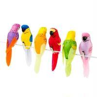 「トーキングテーブル」 トロピカル鳥