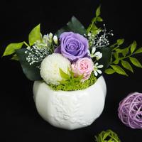 仏花「葵」