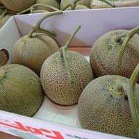 【数量限定!食べやすい小さめサイズ♪】富良野メロン5玉(約1.1kg×5)