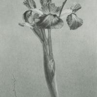 津絵太陽「路傍の花」M3号 Tsue Taiyo