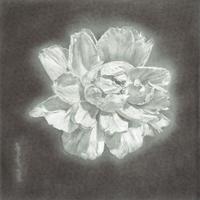 津絵太陽「路傍の花-2-」S3号 Tsue Taiyo