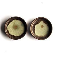 シャーレ豆皿