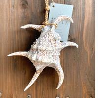 水字貝の「魔除け」L