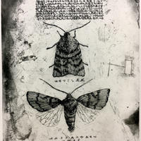 Moth(銅版画)