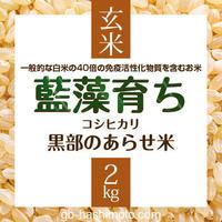 10/3以降発送【令和元年産新米】〈玄米〉『藍藻育ち(らんそうそだち)』 コシヒカリ 【玄米2kg】