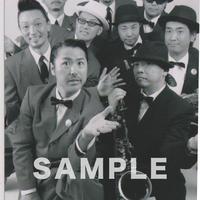THE APOLLOS / マルベル堂プロマイド MP-130