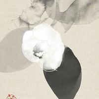 Hidetoshi Mito 白椿一輪