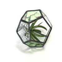 ダイヤ型のテラリウム(SSグリーン)