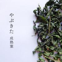 【レターパック対応】萎凋釜炒り茶 華菜シリーズ 2020年 春 やぶきた 成熟葉