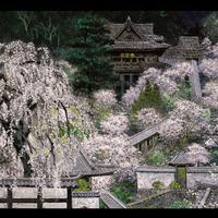 絵はがき:春映長谷