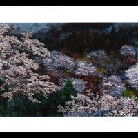 絵はがき:吉野山