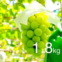 【2020年販売終了しました】シャインマスカット1.8kg☆農家直送