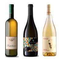 初夏の白ワイン3本セット