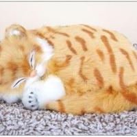 Dream Pets アメリカン ショートヘア 活性炭入り脱臭効果  国内未発売