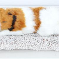 Dream Pets コリー 活性炭入り 脱臭効果国内未発売