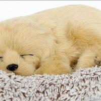 Dream Pets ゴールデンレトリバー 活性炭入り脱臭効果  国内未発売