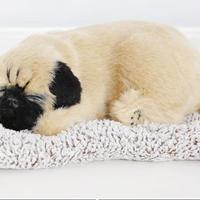 Dream Pets パグ 活性炭入り 脱臭効果国内未発売
