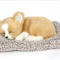 Dream Pets ウェルシュ コーギー 活性炭入り脱臭効果 国内未発売