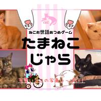 猫カフェカードゲーム・たまねこじゃら