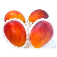 【良品】沖縄県産完熟マンゴー 1.5kg(4〜5個入)(AmazonPay全品対応)