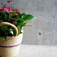 <CLOUDY×gui>Anthurium  basket set(pink×navy)