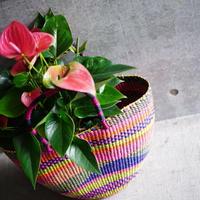 <CLOUDY×gui>Anthurium  basket set(colorful)
