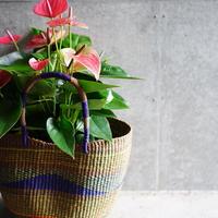 <CLOUDY×gui>Anthurium  basket set(brown)