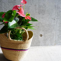 <CLOUDY×gui>Anthurium  basket set(pink×navy)