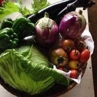 旬の有機JASお試し野菜セット5品目 送料込み