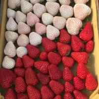 【リンク 農家さん】高知県Berry農園山本さんの紹介です