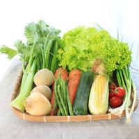 無農薬【沖縄県産】2~3人用お野菜セット
