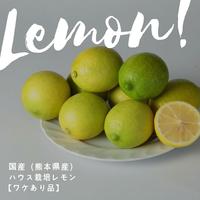 国産(熊本県産)ハウス栽培レモン1kg【ワケあり・家庭用】【量り売り】【産直便】