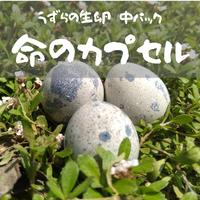【産地直送】命のカプセル(うずらの生卵)中 18パック(180個)