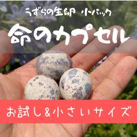 【お試しサイズ】命のカプセル(うずらの生卵)小 2パック(卵20個)