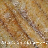 【生産者フルハシ手焼】☆☆☆スターウナギ白焼き