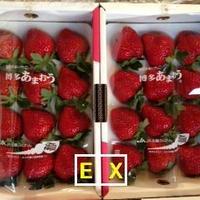 福岡産 博多あまおう EX-2P