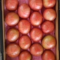 岐阜トマト