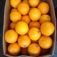 外国産オレンジ