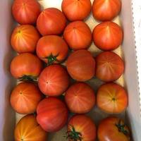 フルーツトマトぐんま産 糖度11度以上 ブリックスナイン小