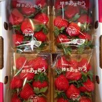 福岡産 博多あまおう 2L