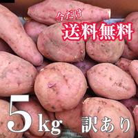 今だけ送料無料!種子島花木農園産  訳あり安納いも 5kgセット
