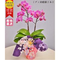 ミディ胡蝶蘭2本立 京都の高級風呂敷包み「有職」4号 ピンク/ホワイト