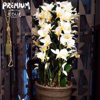 光触媒プレミアムデンドロビウムM5F フォーミー / アートフラワー サイズ200 ギフト 抗菌消臭